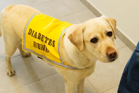 diabeteshund
